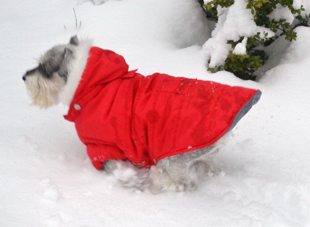 Snow Tailgate -Megan-lizbushong.com